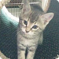 Adopt A Pet :: Sunny - N. Billerica, MA