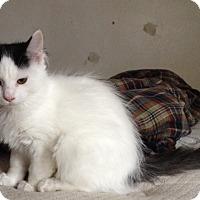 Adopt A Pet :: Rosie - Acme, PA