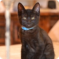 Adopt A Pet :: Geoffrey - St. Louis, MO