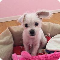 Adopt A Pet :: Einstein - La Quinta, CA