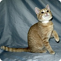 Adopt A Pet :: Archie - Powell, OH