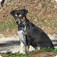 Adopt A Pet :: HANK - Hartford, CT