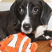 Adopt A Pet :: Hinter - Chapel Hill, NC