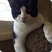 Adopt A Pet :: Opie - Columbus, OH
