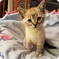 Adopt A Pet :: Adalaide 04-4038 - Fremont, CA