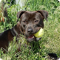 Adopt A Pet :: Conduit - Long Beach, NY