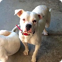 Adopt A Pet :: Riley - Fresno, CA
