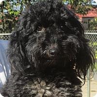 Adopt A Pet :: Nevil - Westport, CT
