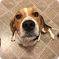 Adopt A Pet :: Topper - Homewood, AL