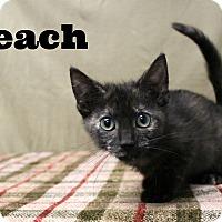 Adopt A Pet :: Peach - Melbourne, KY