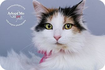 Calico Cat for adoption in Cincinnati, Ohio - Sister- WAIVED FEE