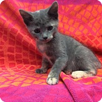 Adopt A Pet :: Dolly - Janesville, WI