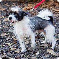 Adopt A Pet :: Sambo - Newburgh, IN