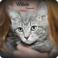Adopt A Pet :: Willow - Glen Mills, PA
