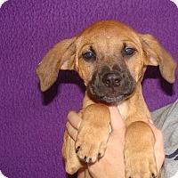 Adopt A Pet :: Violet - Oviedo, FL