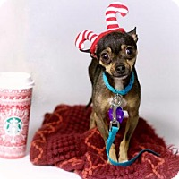 Adopt A Pet :: *Tiny Tim Holiday - Pittsburg, CA