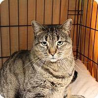 Adopt A Pet :: Sally - Warwick, RI