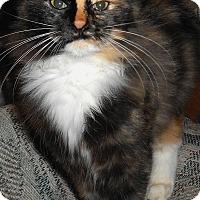 Adopt A Pet :: Olivia - Chattanooga, TN