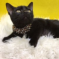 Adopt A Pet :: Raven - Pasadena, TX