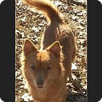 Adopt A Pet :: Henry - Leming, TX