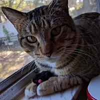 Adopt A Pet :: Bubba - Seminole, FL