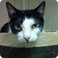 Adopt A Pet :: Picollo - Pineville, NC