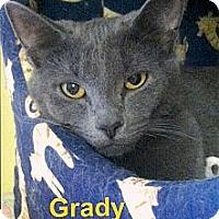 Adopt A Pet :: Grady - Medway, MA