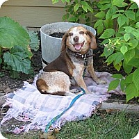 Adopt A Pet :: Sasha - Novi, MI