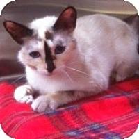 Adopt A Pet :: Aliza - Modesto, CA
