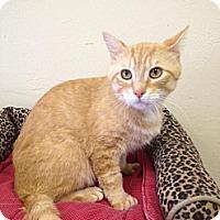 Adopt A Pet :: Chester - St. James City, FL