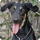 Adopt A Pet :: Kira von Kirschen