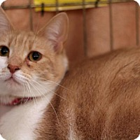 Adopt A Pet :: Sandy - Sacramento, CA
