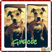Adopt A Pet :: Gracie - Mount Laurel, NJ