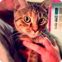 Adopt A Pet :: Harlow - Green Bay, WI