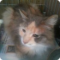 Adopt A Pet :: Cami - Salem, OR