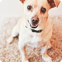 Adopt A Pet :: Jasper - Peachtree City, GA