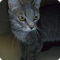Adopt A Pet :: Francis - Hamburg, NY