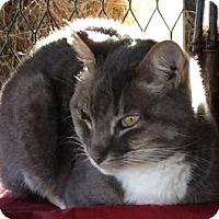 Adopt A Pet :: Doc - Mesa, AZ