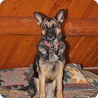 Adopt A Pet :: Kina - Hamilton, MT