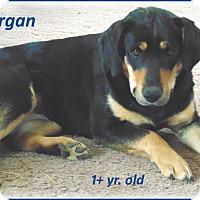 Adopt A Pet :: Morgan - Marlborough, MA
