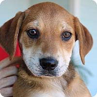 Adopt A Pet :: Chloe Pup (susan) - Homestead, FL