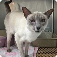 Adopt A Pet :: Lilly - Merrifield, VA