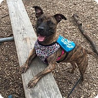 Adopt A Pet :: Reba - Alpharetta, GA