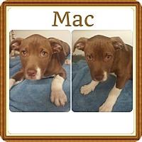 Adopt A Pet :: Mac meet me 4/8 - Manchester, CT