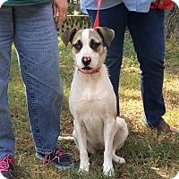 Adopt A Pet :: Winnie - Glastonbury, CT