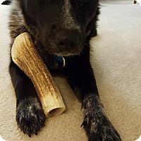 Adopt A Pet :: Misty - Washington, DC