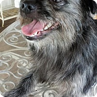Adopt A Pet :: Chewie - Alvin, TX