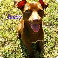 Adopt A Pet :: Jazzy - El Cajon, CA