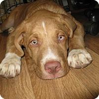 Adopt A Pet :: Hemi - Somerset, KY