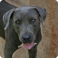 Adopt A Pet :: Zelda - Lufkin, TX